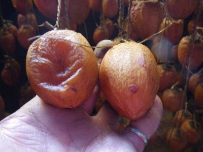 つるし柿作り体験(11月30日、12月1日)