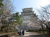 勝山城の桜