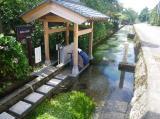 治左川の梅花藻