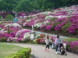 鯖江市 観光情報